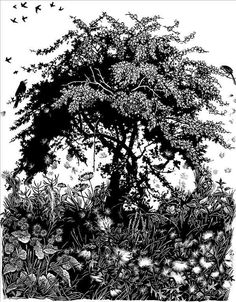 ✨  Miriam Macgregor. Thorn in August. (wood engraving) by Theme