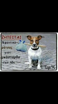 Kindness To Animals, Funny Greek, Greek Quotes, Animals And Pets, Dog Lovers, Dog Cat, Best Friends, Funny Quotes, My Love