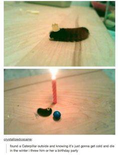 Happy Birthday, Caterpillar - Win Picture