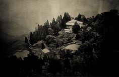 Tea Tasting in Darjeeling - 62 by St