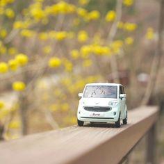 #기아자동차 #레이 #다이캐스트 와 함께 #봄꽃 으로 물든 #곤지암화담숲 #나들이 어떠세요?   How about going on a #picnic with #KIA #Motors #RAY #diecast to #Hwadamsup lit by #spring flowers?  #car #flower #toy #spicebush #trip #daily #소풍 #숲 #생강나무 #꽃 #자동차 #장난감 #소소잼 #일상 #데일리 #자동차그램