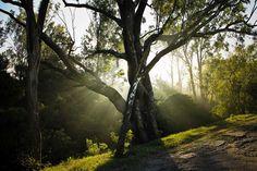 Morning rays from nandi hills