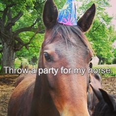 #horse #horses #party #partyhat #hat #throw #horseparty #beautiful #bucketlist #equestrian #equine #english #western #equinebucketlist #equestrianbucketlist #doubletap #followme #follow