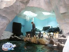 Antarctica: Empire of the Penguin - penguin habitat at #SeaWorld Orlando!
