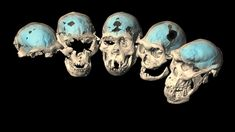 Early Humans, First Humans, Brain Shape, 3d Reconstruction, Cerebral Cortex, Brain Structure, Scientific Articles, Human Evolution, Human Skull