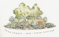 what is a food forest