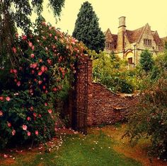 beautiful, cottage, flowers, garden, gate, green - inspiring picture on Favim.com