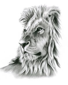 Charcoal+Drawing+8x10+Print+Lion+Art+Lion+Drawing+by+JaclynsStudio