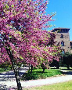 #springtime#universitylife#unipv  by francesca.monti_