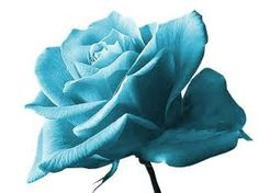 Tiffany Blue Rose. I want a guy to give me a flower like this!