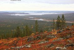 The Inari Lake, view from the Otsamo Fells, Lapland, Finland Arctic Tundra, Lapland Finland, Felt Pictures, Scandinavian Countries, Lappland, Walking In Nature, Lake View, Where To Go, Mother Nature