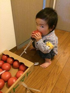 森川さんとこのトマト、加西市