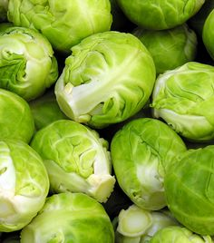 Learn how to plant, grow, and harvest Brussels Sprouts with this growing guide from The Old Farmer's Almanac. Roasted Sprouts, Sprouts Salad, Sprouts With Bacon, Sprouts Recipe, Sprouts Food, Fruits And Veggies, Fruits And Vegetables, Small Cabbage, Grow Organic