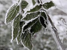 #mist #fogg #vorst #frost #winter #Julianapark #Bolsward #Friesland #macro