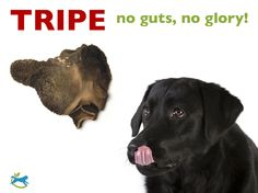 The magical mystery meat that dogs crave and humans fear! Tripe seems to be the line in the sand drawn between beginning raw feeders and the 'been there, done that' old pros.   Learn more about the nutrition and immune boost tripe can offer your dog: http://www.dogsnaturallymagazine.com/the-stink-on-tripe/