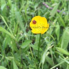 #ladybug #buttercup #wildflowers #bugs #naturephotography #nature #wildlife #photos #photography #photographer #myshot #nikon #ig_nikon #ig_photo #ig_nature #ig_wildlife #ig_wildflowers #ig_ladybug http://tipsrazzi.com/ipost/1517777599236301763/?code=BUQOq9ahmPD