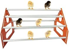 The hen shelf is of large size, thus it has more space. It is of adjustable space design. You can adjust the space according to the growth of the chicks. It is suitable for both small and large chicks. The shelf adds in more room and fun for the chicks in the hen house. The shelf is comfortable. It is well designed with bionic skin texture. It helps your chicks to hold on tight and more comfortable, then the little chickens can easily learn how to take rest on the shelf. Small Chicken Coops, Chicken Toys, Jungle Gym, Hen House, Hens, Poultry, Parrot, Bird, Texture