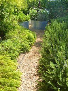 Garten immergrüne-Pflanzen Kieswege-anlegen ideen                                                                                                                                                                                 Mehr