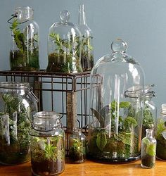 Ideas To Use Mini Terrariums In Interior Decorating And Table Serving
