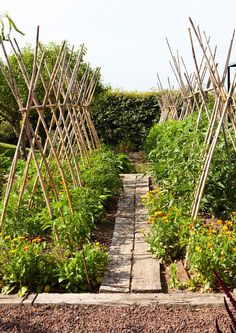 Love using old boards as a walkway in the garden.