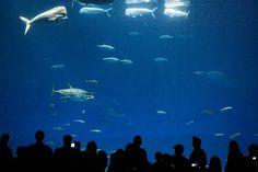 Monteray Bay Aquarium