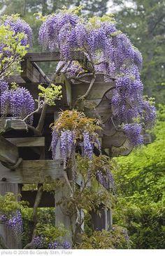 Whimsical Garden Dreams… ladyrinth ideas