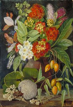 from Kew:  Painting 721 -   New Zealand Flowers and Fruit  Location: New Zealand  Plants: Vegetable Sheep, Raoulia eximia Fern, Trichomanes reniforme Bramble, Rubus australis Karaka, Corynocarpus laevigata