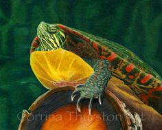 """My """"Painted Turtle"""" colored pencil drawing. On illustration board. Check out my Etsy shop for art products of this piece! https://www.etsy.com/shop/CatStudiosArt?ref=si_shop"""