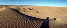 Nature in Zagora, Morocco (kameltrekking) - a photo by heidi