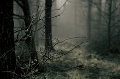 Shared by Malefica. Find images and videos about photography, nature and winter on We Heart It - the app to get lost in what you love. Twilight, Nature Sauvage, The Embrace, Over The Garden Wall, Dark Forest, Magical Forest, Haunted Forest, Foggy Forest, The Great Outdoors