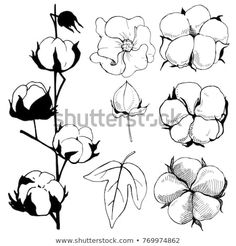 Find Hand Drawn Flowers Cotton Plant Flowerblack stock images in HD and millions of other royalty-free stock photos, illustrations and vectors in the Shutterstock collection. Thousands of new, high-quality pictures added every day. Nature Sketch, Cotton Plant, Flower Sketches, Plant Drawing, Hand Drawn Flowers, Line Illustration, Flower Tattoo Designs, Book Of Shadows, Line Art