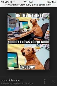 469f29c823e7d 😂😂funny Funny Dogs, Funny Animals, Funny Animal Videos, Animal Funnies,