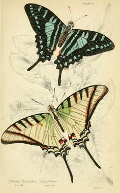 1858 - Foreign butterflies by James Duncan, Sir William Jardine
