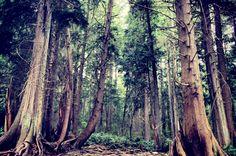 Road trip: Portland to Redwood National Park  #allcountyplumbing www.all-county-plumbing.net | Repinned by @jonssonkamperin