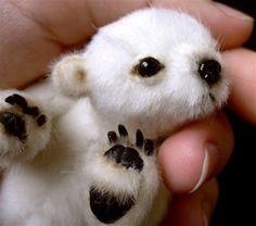 baby polar bear<3