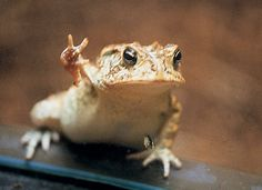 "Toad in the Window by Barbara Andras. He looks like he's saying, ""Peace Out, Dude!"""