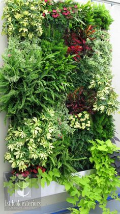 Living Wall, often mounted on the side of the home, or a garden wall, captures water in cubicles, sharing with lower compartments.