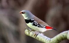 aves exoticas - Google Search