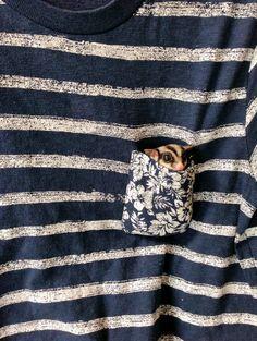 Kurzkopfgleitbeutler in Brusttaschen? ICH KANN NICHT MEHR! | 21 kleine Tiere…