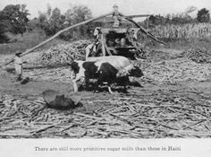 At one time, sugar production was the be-all and end-all of France's colonial aspirations in St. Domingue and helped fund the ascent of port cities like Marseilles.