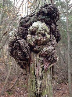 Interesting tree burl found in Parvins State Park in NJ