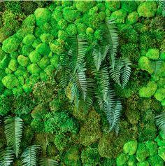 David Brenner, Living Walls, Vertical Gardens, Horticulture, Habitats, Harvest, December, Projects, Design