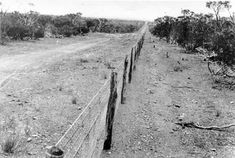 Black and white photo of the rabbit-proof fence Western Australia, 1920 Berlin City, West Berlin, Siegfried Line, Flood Barrier, Aboriginal History, Australian Photography, Native Girls, Year 6, Back In Time