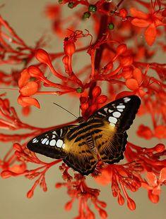 через объектив: Красивые фотографии бабочек