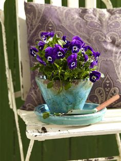 Pansies in a Cup-