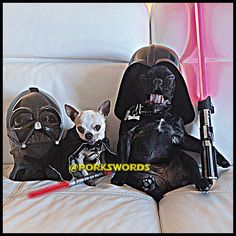 Snooki and Cucuy decided to take over the Death Star! by porkswords Evil in tiny packages.