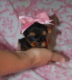 such a peanut with a big girl bow