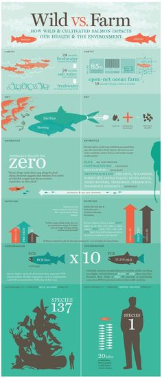 """Wild caught salmon ♥ Wild caught Alaskan salmon Wild vs Farm How Wild & Cultivated Salmon Impacts our Health & the Environment Infographic """".farm salmon does indeed contain chemicals. Information Design, Information Graphics, Pescado Salmon, Chefs, Food Facts, Data Visualization, Fly Fishing, Fishing Stuff, Good To Know"""