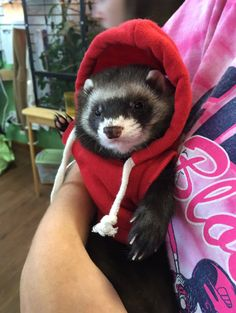 Like this ferret in a tiny hoodie.   21 Small Animals That Deserve More Internet Love