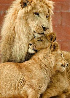 Family Pride #EasyNip